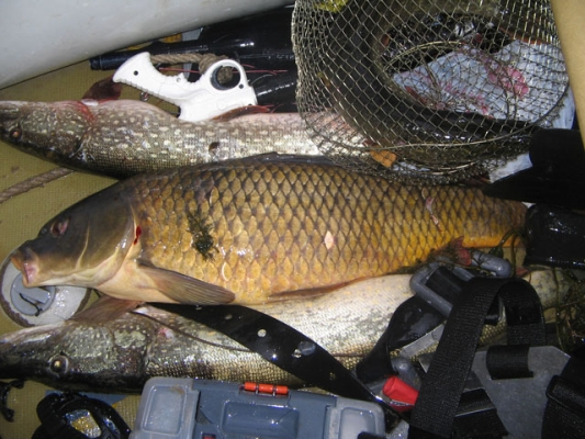 база отдыха для рыбалки саратов